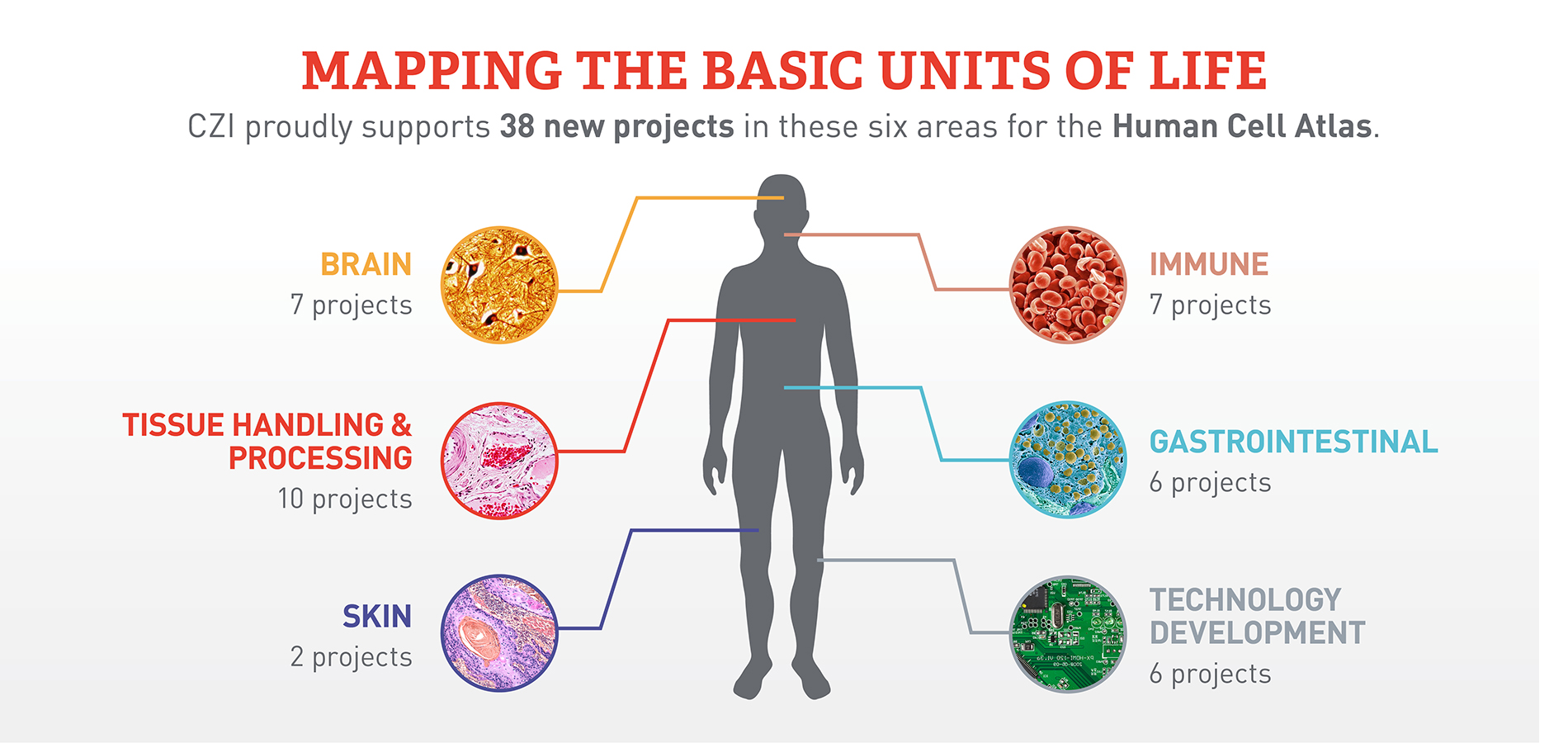 Mapping The Basic Units Of Life The Chan Zuckerberg Initiative